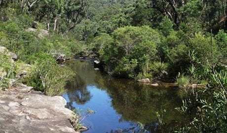 Uloola Falls campground pool, Royal National Park. Photo: Andy Richards/NSW Government