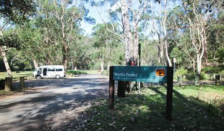 Wattle Forest picnic area, Royal National Park. Photo: Andy Richards/NSW Government