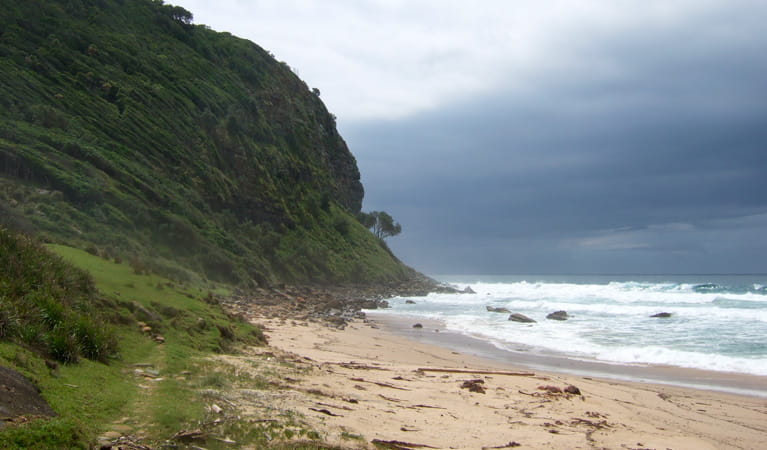 Werrong Beach track, Royal National Park. Photo: OEH