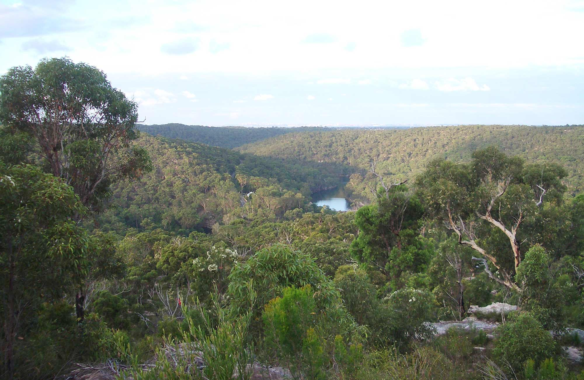 Uloola Track, Royal National Park. Photo: Andy Richards/NSW Government