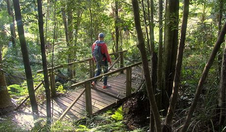 Bridge over creek on Forest path in Royal National Park. Photo: Natasha Webb/OEH