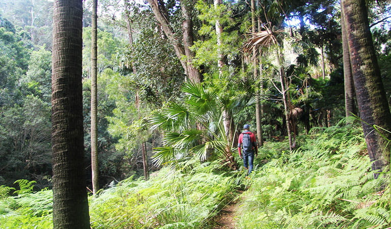 Kids love trekking among the ferns on Forest path walking track. Photo: Natasha Webb/OEH