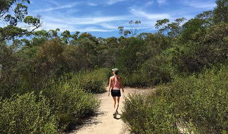Bushwalker on the Karloo walking track. Photo: OEH