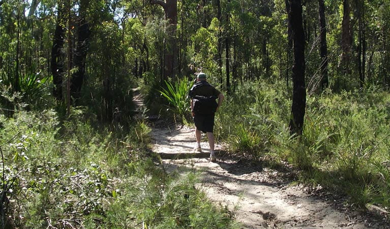 Bushwalker on the Karloo walking track. Photo: Andy Richards
