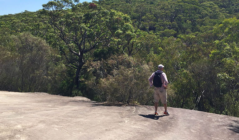 Looking out over the tree tops along Karloo walking track. Photo: OEH