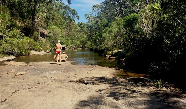 Karloo walking track in Royal National Park. Photo: OEH