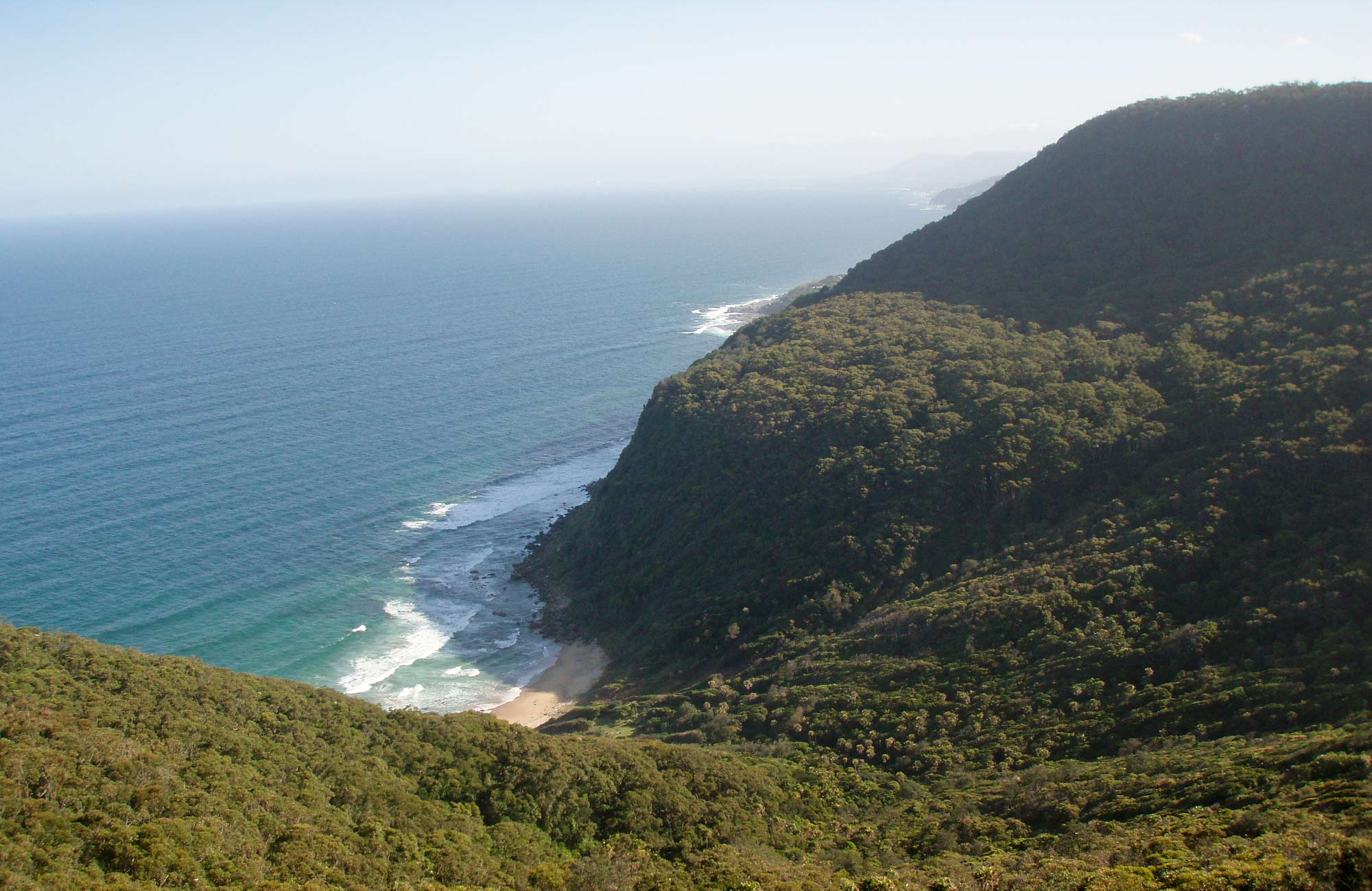 Palm Jungle loop track, Royal National Park. Photo: OEH