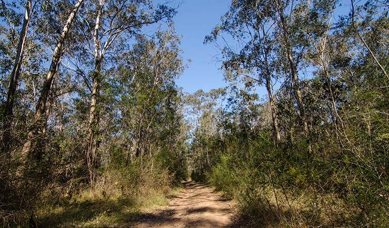 Scheyville National Park, Horseriding trails. Photo: John Spencer/NSW Government