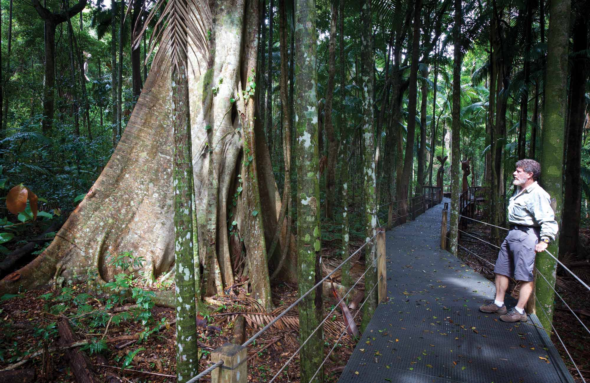 Sea Acres Rainforest Boardwalk, Sea Acres National Park. Photo: Rob Cleary