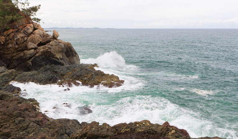 Port Macquarie coastal walk, Sea Acres National Park. Photo: Rob Cleary