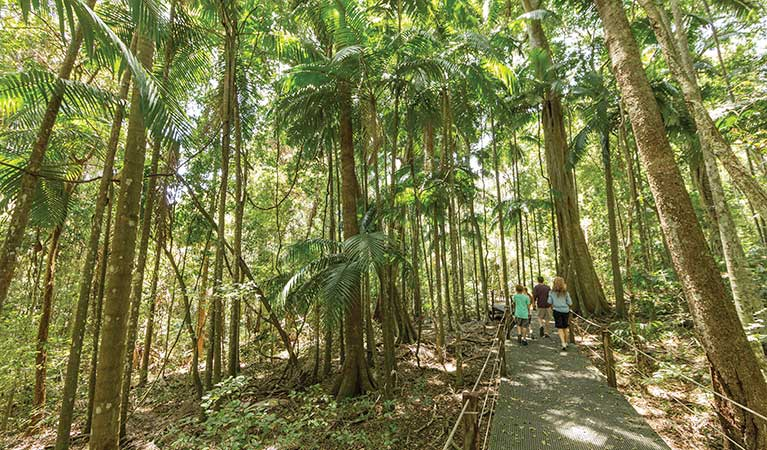 A family explores the Sea Acres rainforest boardwalk in Sea Acres National Park. Photo: D Finnegan/OEH.