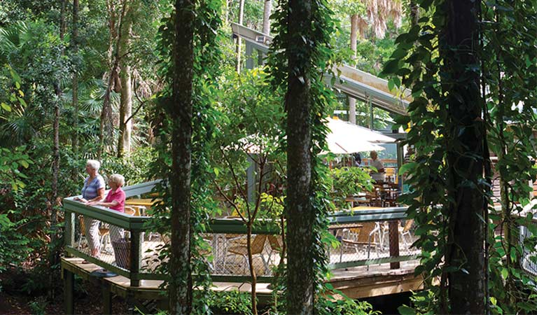 Rainforest Cafes at Sea Acres National Park. Photo: R Cleary Seen Australia/OEH.