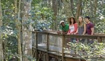 Visitors looking out from Sea Acres Rainforest boardwalk. Photo: John Spencer © DPIE