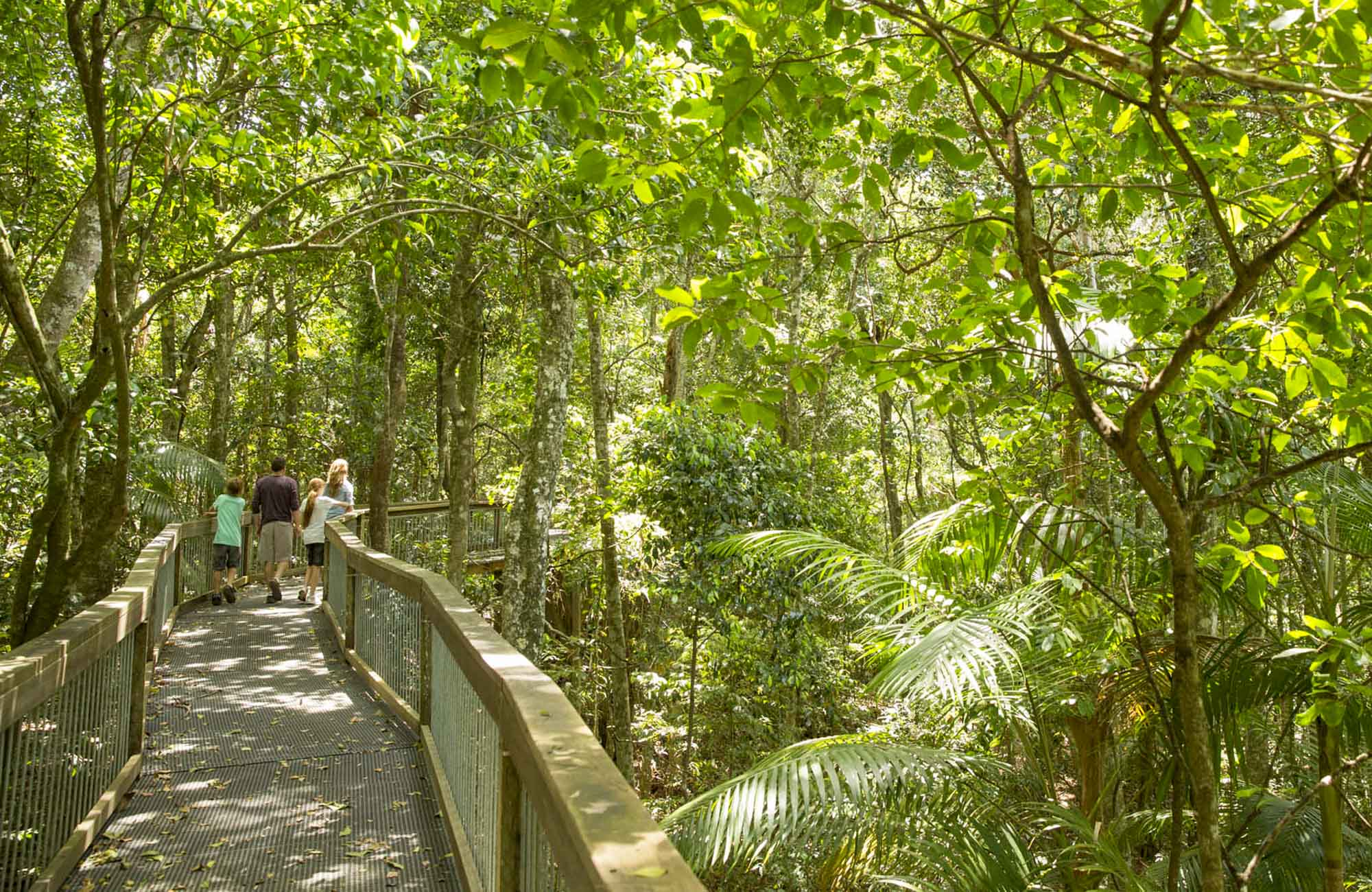 Sea Acres Rainforest Centre, Sea Acres National Park. Photo: David Finnegan/NSW Government