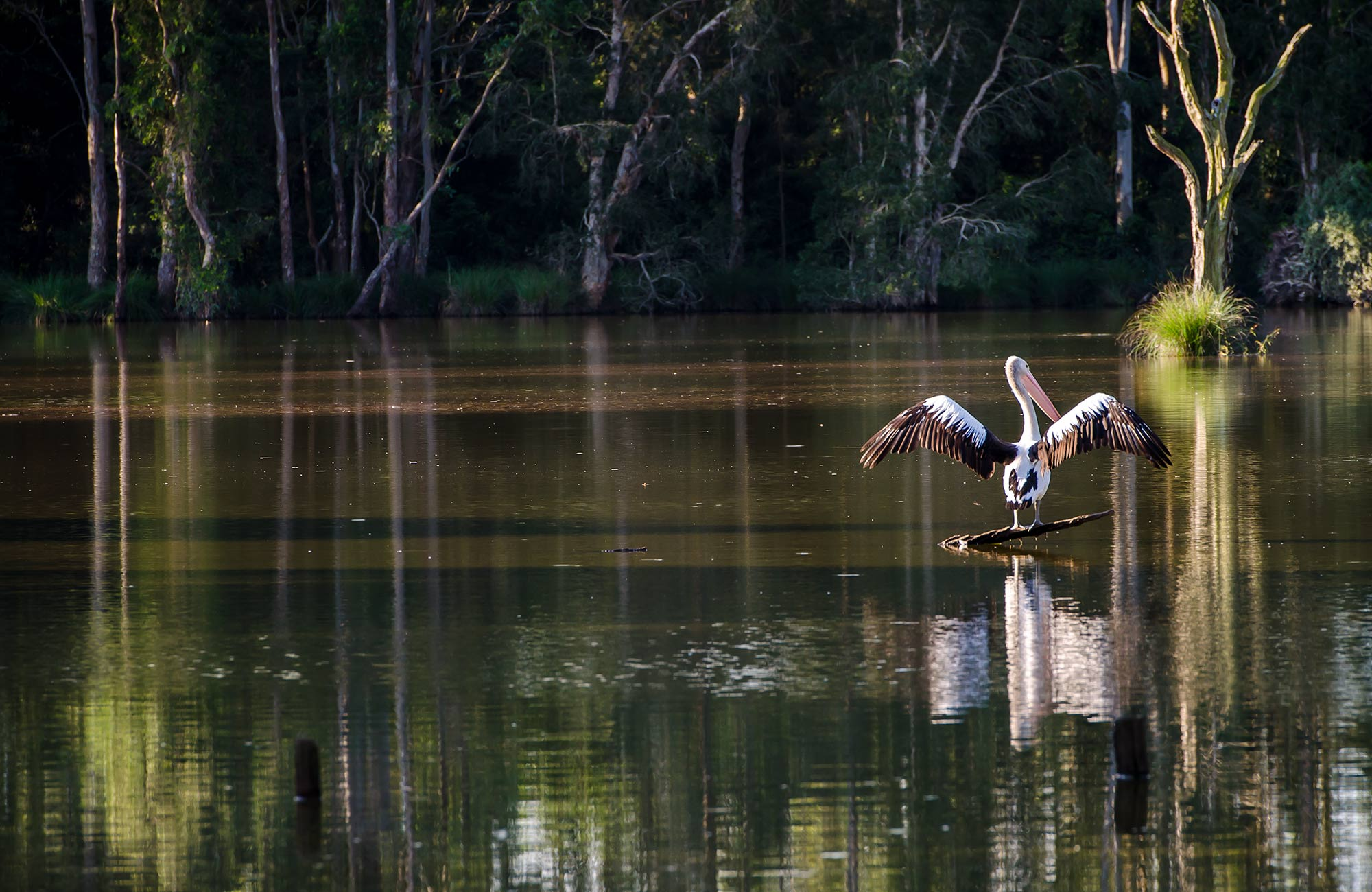Seaham Swamp Nature Reserve. Photo: John Spencer/NSW Government