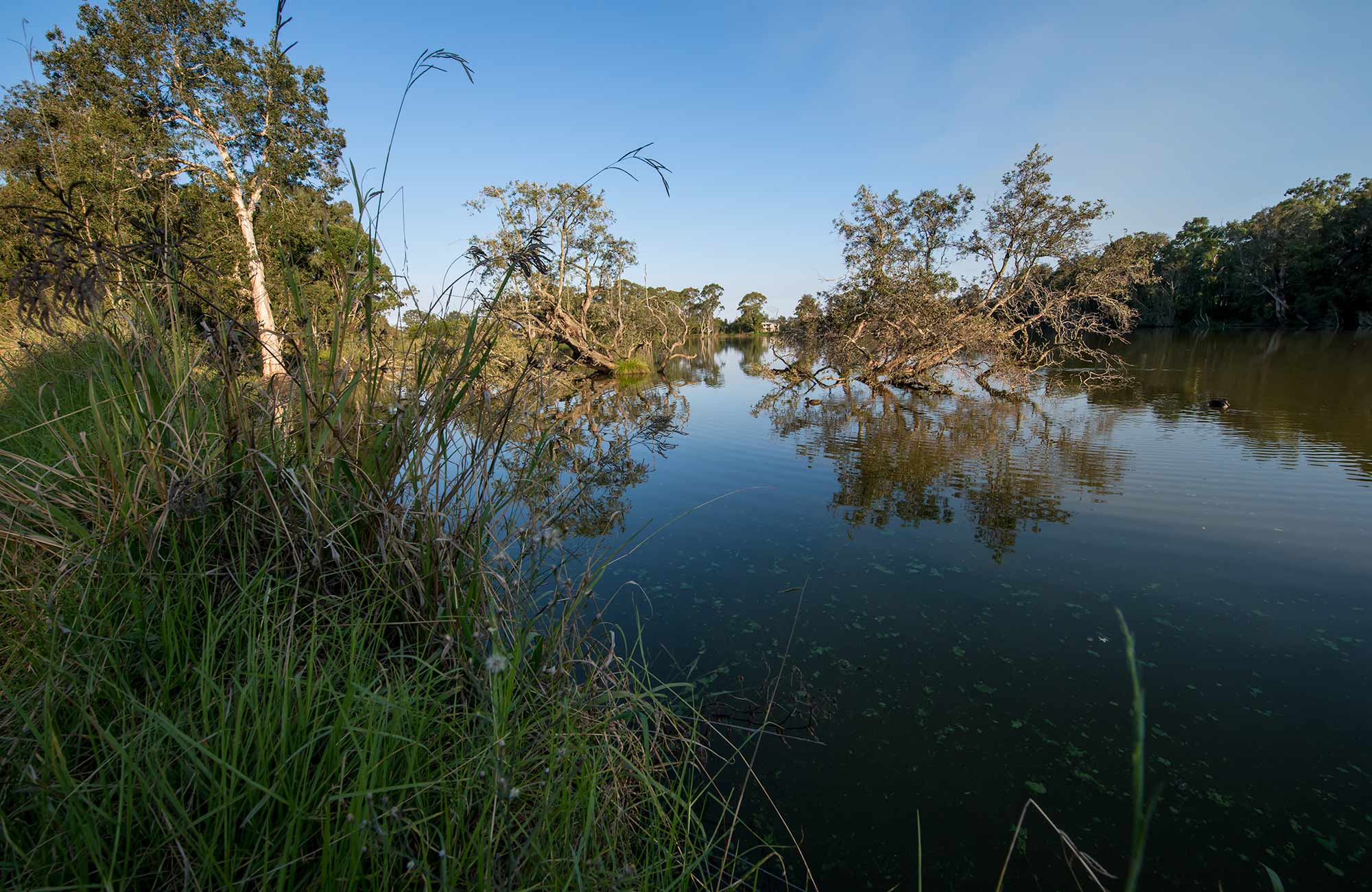 Seaham Swamp Bird Hide, Seaham Swamp Nature Reserve. Photo: John Spencer/NSW Government