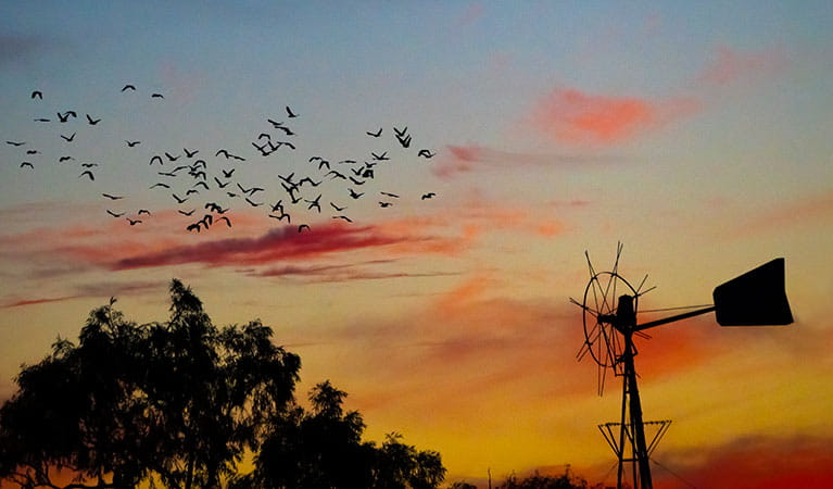 Bird flock at sunset in the Mount Wood area of Sturt National Park. Photo: John Spencer/DPIE