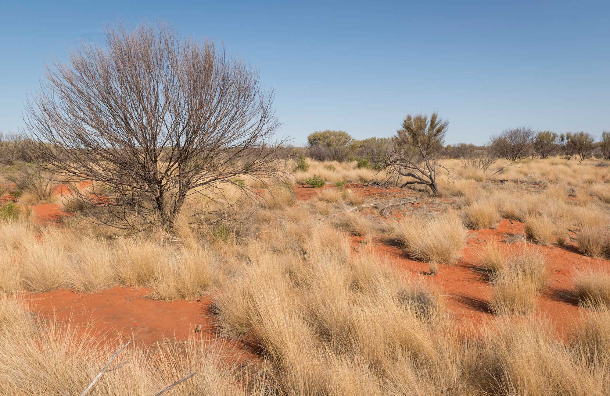Desert shrubs and red earth in Sturt National Park. Photo: John Spencer/DPIE