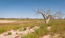 Sturt's tree walk in Sturt National Park. Photo: John Spencer/DPIE