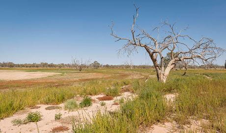 Dead tree and dry lake shore along Wells and Sturt's tree walking track in Sturt National Park. Photo credit: John Spencer © DPIE
