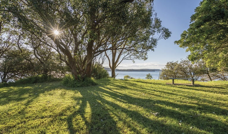 Under the shade of the trees at Bottle and Glass Point, Sydney Harbour National Park. Photo: John Spencer/OEH