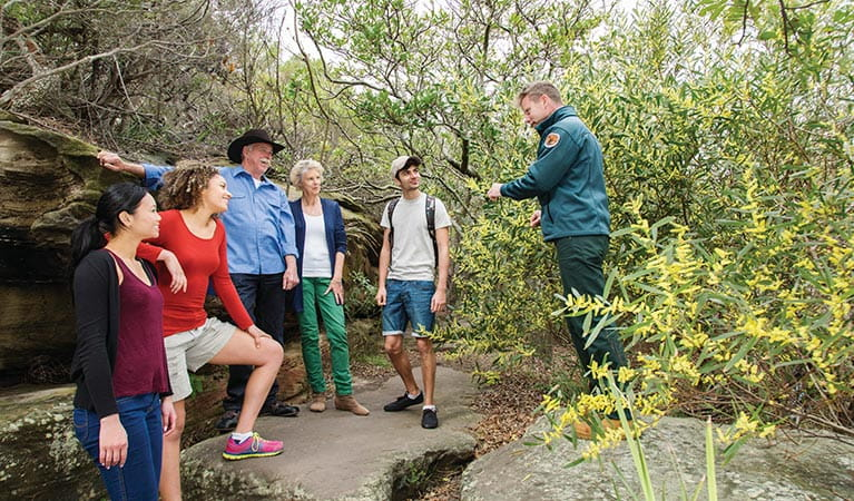 Ranger giving a tour on Hermitage Foreshore track in Nielsen Park. Photo: Simone Cottrell/DPIE