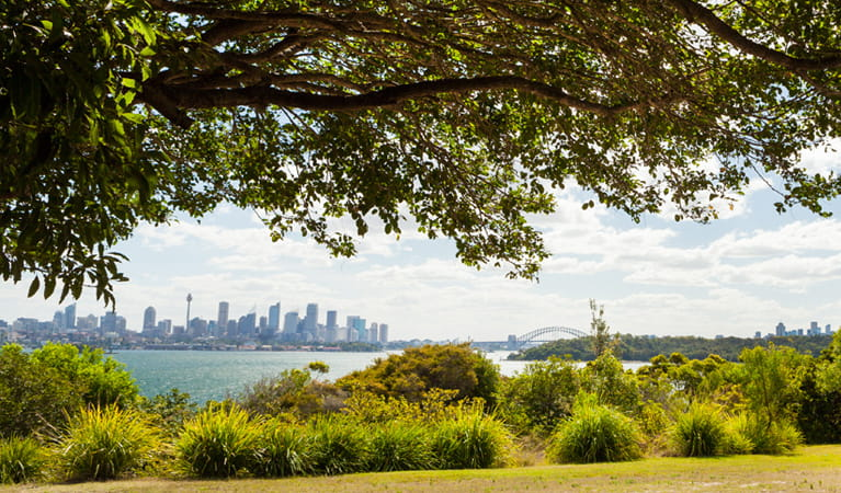 Neilsen Park, Sydney Harbour National Park. Photo: David Finnegan