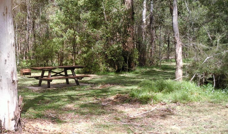 Mullon Creek campground, Tallaganda National Park. Photo: S Jackson/NSW Government