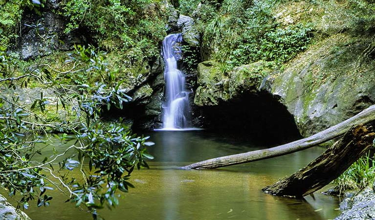 Potoroo Falls, Tapin Tops National Park. Photo: S.Calvin/NSW Government