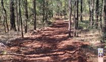 Yana-y Warruwi walking track, Terry Hie Hie Aboriginal Area. Photo: Matthew Bester
