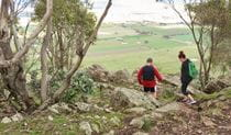 Yerong walking track, The Rock Nature Reserve - Kengal Aboriginal Place. Photo: A Lavender