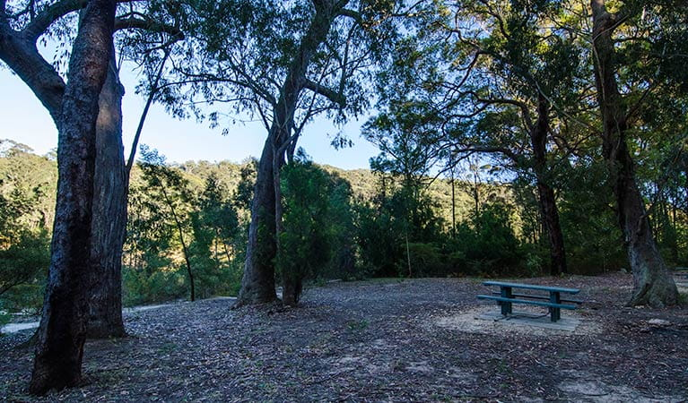 Werri Berri picnic area, Thirlmere Lakes National Park. Photo: John Spencer