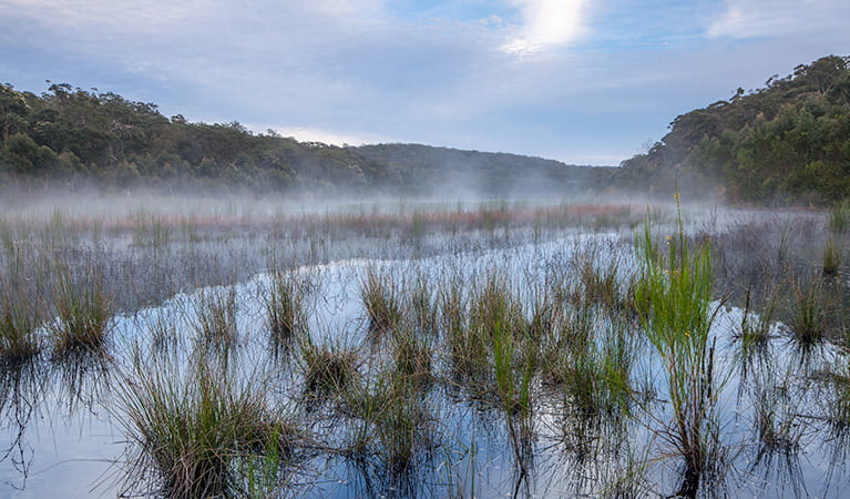 View of a mist-covered lake surface with marsh grasses in the foreground. Photo credit: Ian Brown © DPIE