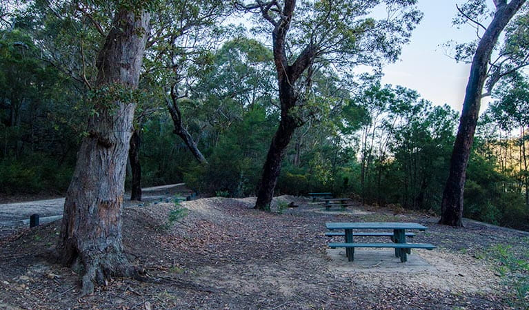 Werri Berri picnic area bench, Thirlmere Lakes National Park. Photo: John Spencer