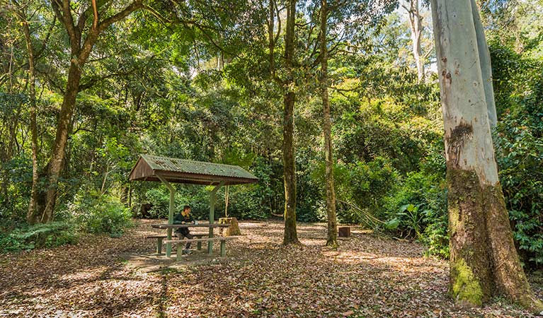 Tooloom picnic area, Tooloom Nature reserve. Photo: David Young