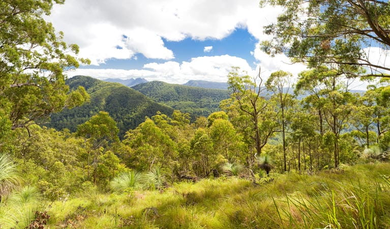 Sherwood Lookout, Toonumbar National Park. Photo: Hamilton Lund/Destination NSW