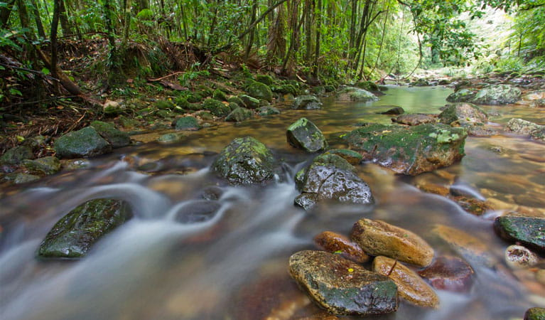 Ironpot Creek,, Toonumbar National Park. Photo: Robert Ashdown
