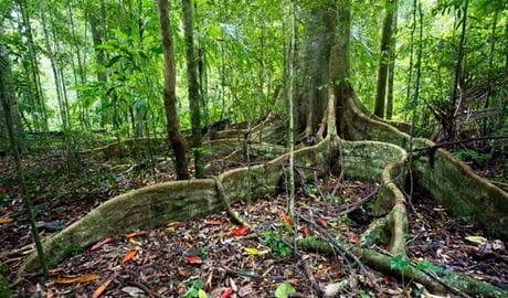 Scrub Walking Track, Toonumbar National Park. Photo: Robert Ashdown