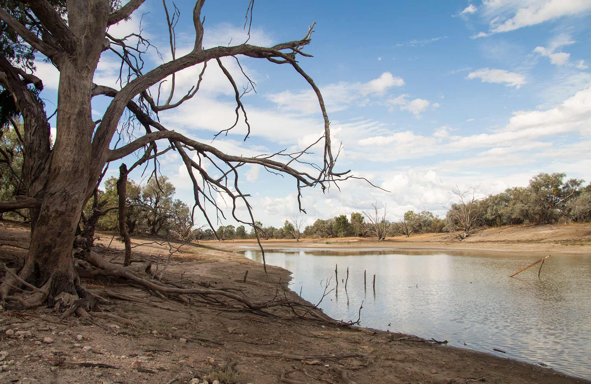 Darling River drive, Toorale National Park and State Conservation Area. Photo: Gregory Anderson