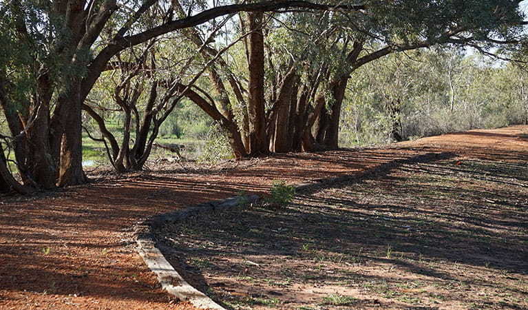 Short, accessible Warrego Floodplain walking track that winds under shady coolabah trees in Toorale National Park. Photo: Chris Ghirardello © DPIE