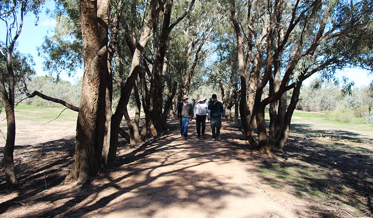 A group of people walk along a wide dirt walking track shaded by tall coolabah trees. Photo: Jessica Stokes © DPIE