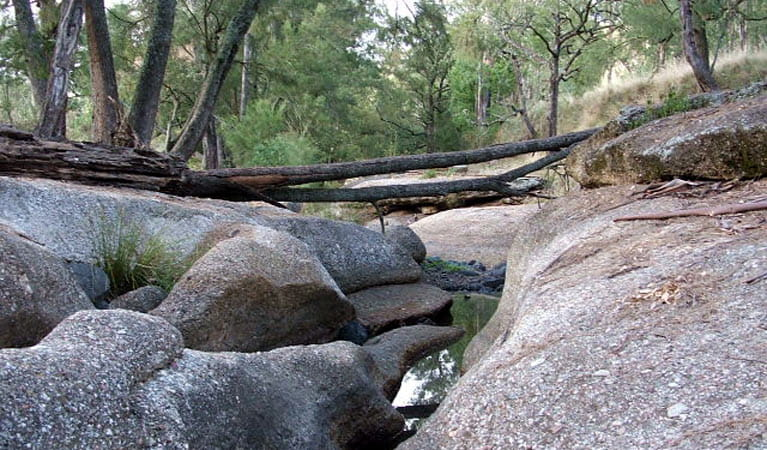 Washpool waterhole, Towarri National Park. Photo: NSW Government