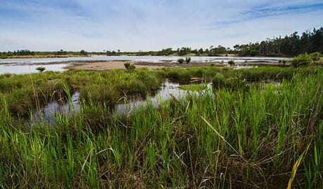 Wetlands, Towra Point Nature Reserve. Photo: John Spencer/NSW Government
