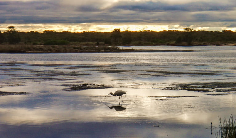 Wooloware Wader Lagoon, Towra Point Nature Reserve. Photo: Andres Bianchi