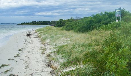 Towra Beach Day Use Area, Towra Point Nature Reserve. Photo: OEH