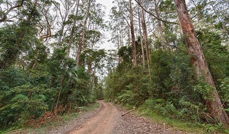 End Peak walking track, Ulidarra National Park. Photo: Rob Cleary