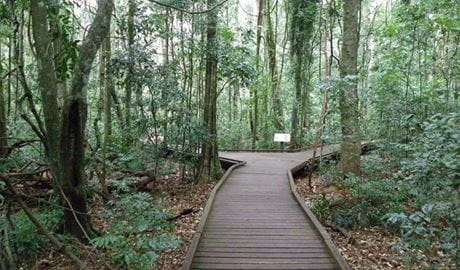Victoria Park boardwalk, Victoria Park Nature Reserve. Artist: NSW Government
