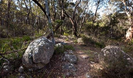 Tuross Falls Walking Track, Wadbilliga National Park. Photo: Lucas Boyd Photography/NSW Government