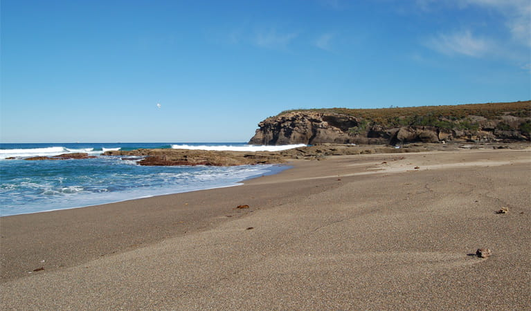 Pinny Beach, Wallarah National Park. Photo: NSW Government