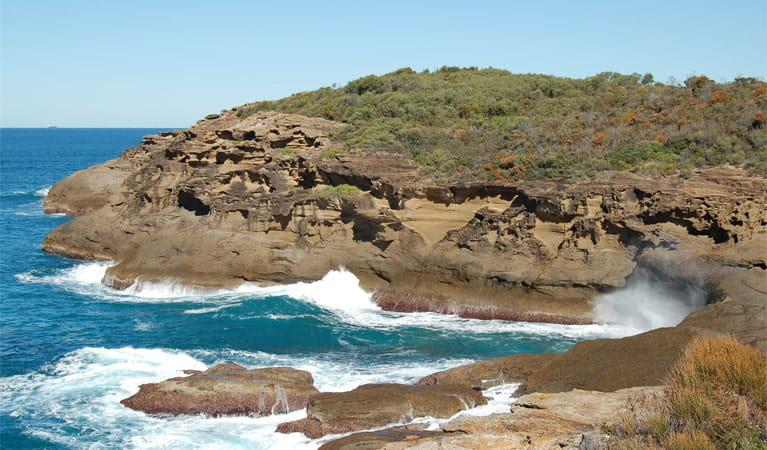 Coastal Walk, Wallarah National Park. Photo: Susan Davies